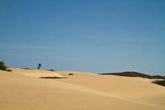 перспектива дюн горжетки Стоковая Фотография RF