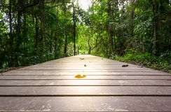 Перспектива деревянного моста внутри глубоко Стоковые Изображения