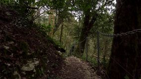 Перспектива идти на путь в зеленой роще Yew-boxwood леса в Сочи видеоматериал