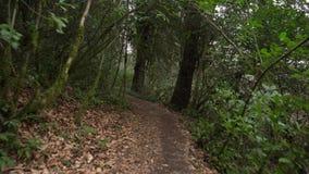 Перспектива идти на путь в зеленом лесе абхазии сток-видео
