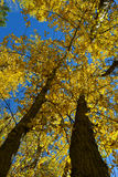 Перспектива 01 листвы осени верхняя Стоковое фото RF