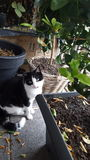 Перспектива кота Стоковое Фото