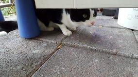 Перспектива кота Стоковая Фотография