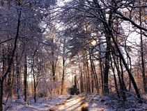 Перспектива леса стоковое фото