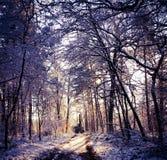 Перспектива леса стоковые фото