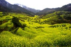Перспектива поля рапса Цзянси Wuyuan золотого стоковое фото rf