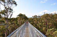 Перспектива прогулки верхней части дерева: Дания, западная Австралия Стоковые Изображения RF