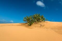 Перспектива пустыни на накидке Dinh, Ninh Thuan, Вьетнаме стоковые фото