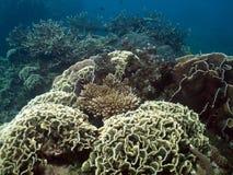 перспектива сада коралла Стоковое Изображение