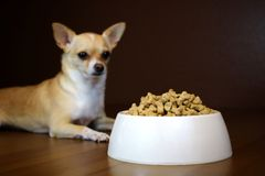 Перспектива собаки шара еды