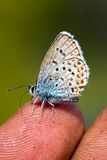 перст бабочки Стоковое фото RF
