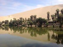 Перуанский оазис Стоковая Фотография