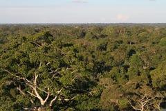 Перуанский тропический лес в свете утра стоковое фото rf