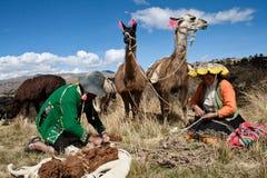 Перуанское крестьянское и их ламы Стоковое Изображение RF