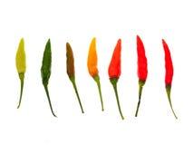 Перцы горячего chili изолированные на белой предпосылке Стоковые Фото