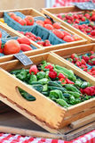 Перцы и томаты Стоковые Фотографии RF