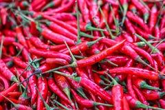 Перцы красного chili, Стоковые Изображения RF