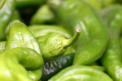 перцы макроса chili зеленые Стоковое Изображение RF