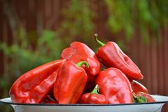Перцы свежего красного kapia сладостные изолировали фото Стоковая Фотография RF