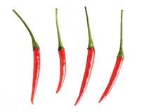 перцы чилей красные Стоковые Фото