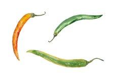 Перцы chile акварели Стоковое Изображение RF