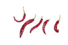 перцы chili горячие красные Стоковое фото RF