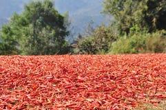 Перцы chili засыхания Стоковые Изображения RF