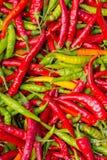 перцы chili зеленые красные Стоковая Фотография