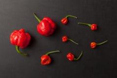 перцы chili красные Стоковые Фото