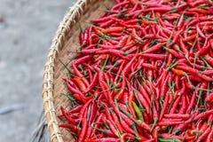 перцы chili красные Стоковое Изображение