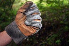 перчатка стоковые изображения rf