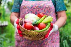 Перчатки женщины нося с свежими овощами в коробке в ее Хане Стоковые Фото