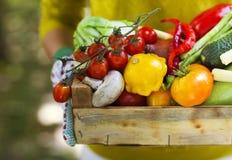 Перчатки женщины нося с свежими овощами в коробке в ее Хане Стоковое фото RF