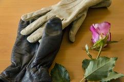 Перчатки с розой Стоковые Фотографии RF