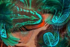 Пер голубого зеленого цвета Стоковые Фото