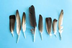 Пер голубя на голубой предпосылке Стоковое фото RF