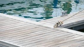 Перлинь на моле с узлом веревочки плавания Стоковые Изображения