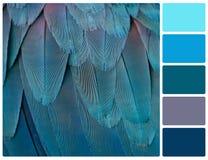 Пер попугая с образцами цвета палитры Стоковые Изображения