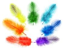 Пер птицы Гвинеи покрашены в ярких цветах радуги Стоковая Фотография RF
