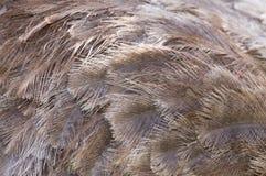 Пер птицы предпосылки Стоковая Фотография