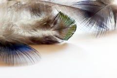 Пер птицы цвета лежа на белой бумаге Стоковые Фото