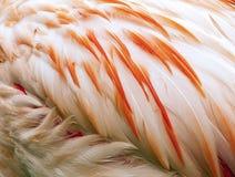 Пер птицы Стоковые Изображения