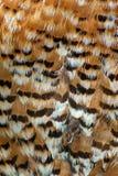 Пер птицы Стоковое фото RF