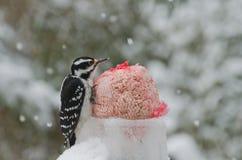 Пер сердца форменные на woodpecker Стоковые Фото