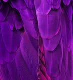 Пер фиолетовых/пинка ары стоковое фото