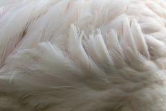 Пер фламинго, абстрактное мех предпосылки Стоковая Фотография RF
