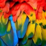 Пер Macaw шарлаха Стоковые Фото