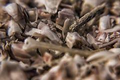 Пески пляжа мекки Стоковая Фотография RF