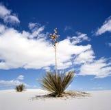 пески США памятника Мексики национальные новые белые Стоковое фото RF
