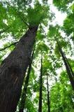 Песня джунглей Стоковые Фото